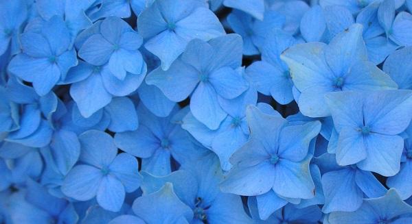 Сонник: к чему во сне снится синий, голубой, фиолетовый, сиреневый цвет?