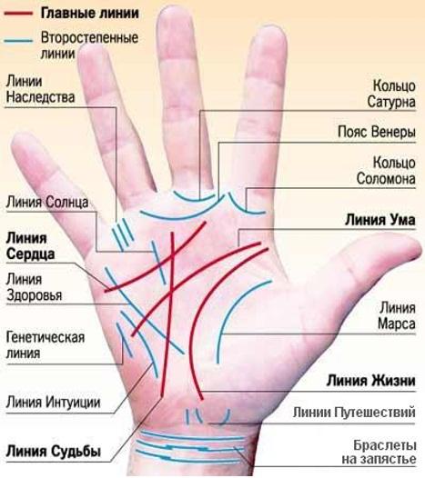 Значение линий правой и левой руки в хиромантии, отличия ладоней